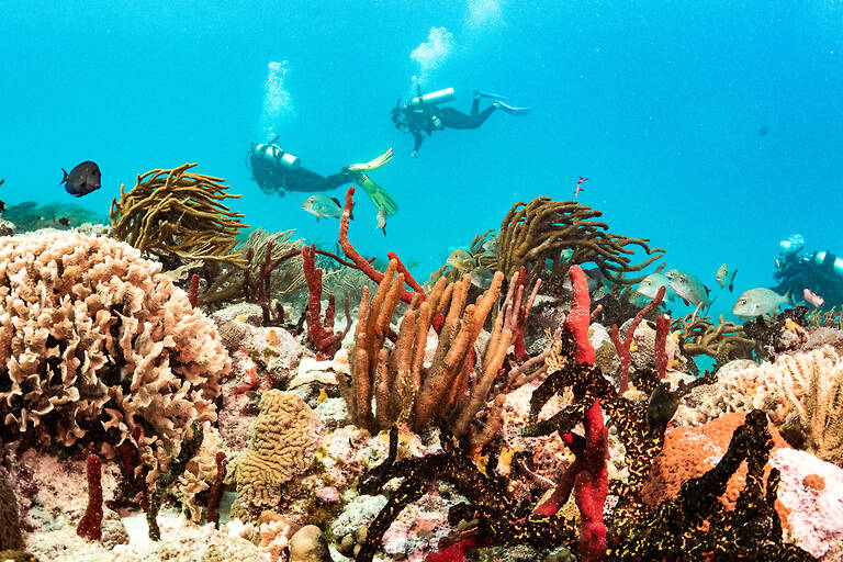 Coral reef with divers in the background