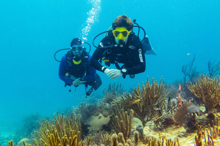 Two divers on a coral reef